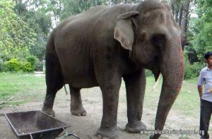 Elephant care volunteer in Saurahamm chitwan, Ne