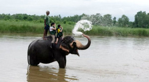 Volunteer with Elephants Chitwan Nepal